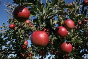 Antioxidantii-naturali-300x200.jpg