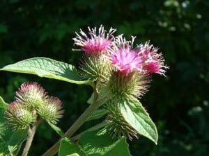 Plantele-medicinale-300x225.jpg
