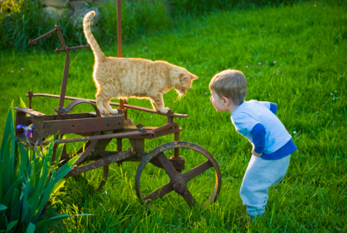 Boala zgarieturii de pisica la copii