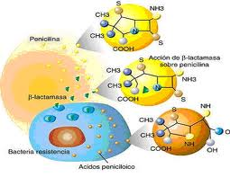 Mecanismul rezistentei la penicilina