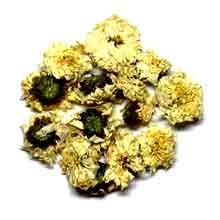 Crizantema uscata