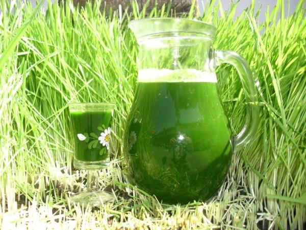 Suc de orz verde, Foto: eco-natural.eu