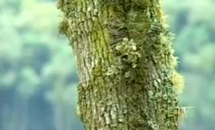 Scoarta arborelui
