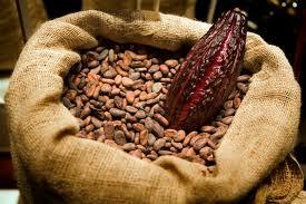 Boabe-de-cacao