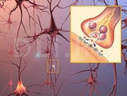 Mecanismul neurotransmitatorilor