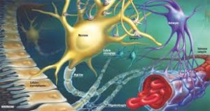 Neurotransmitatorii mecanism de functionare