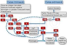Factori de coagulare sangvina