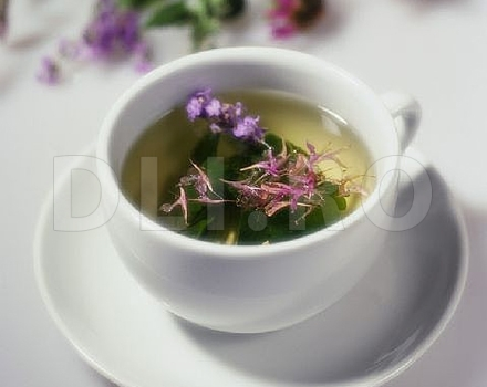 Ceaiul de maghiran