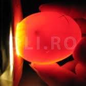 Embrionul miracolul vietii