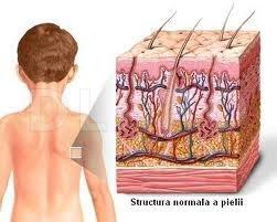 Structura-normala-a-pielii