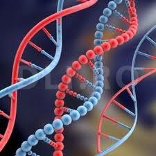 ADN-ul structura dublu-helix