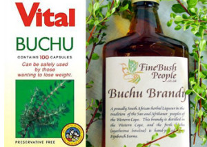Arbustul Bucco (Agathosma betulina), Medicament