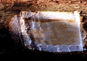 Alstonia scholaris, Trunchiul arborelui