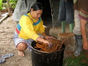 Liana ayahuasca, Banisteriopsis caapi