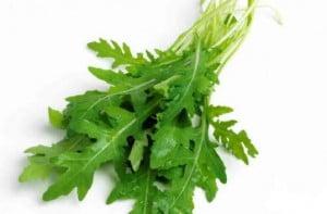 Voinicica (Eruca sativa), Rucola
