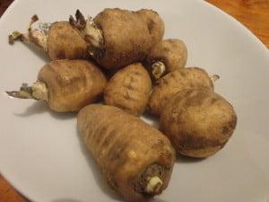 Baraboiul-bulbos (Chaerophyllum bulbosum), Radacina