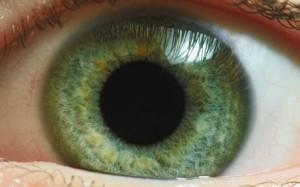 Restabilirea vederii cu ajutorul celulelor stem, Foto: telegraph.co.uk