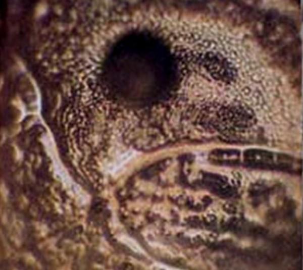 Molecula de apa din apa unui rau murdar