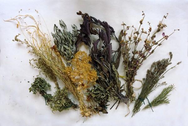 Plante medicinale uscate, Foto: dobiesofdevon.blogspot.ro