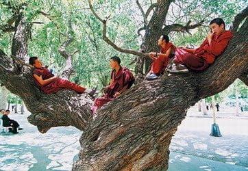 Calugari tibetani, Foto: dyejobslye.blogspot.ro