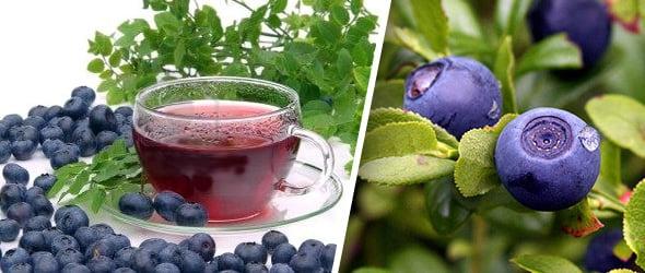 Ceai cu afine si miere, Foto: medvoice.ru