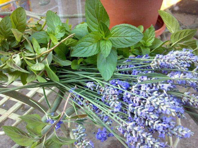 Levantica si alte plante, Foto: wellfednaima.com