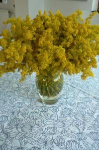 Flori de sanziene, Foto: kezugyessegdolga.blogspot.ro