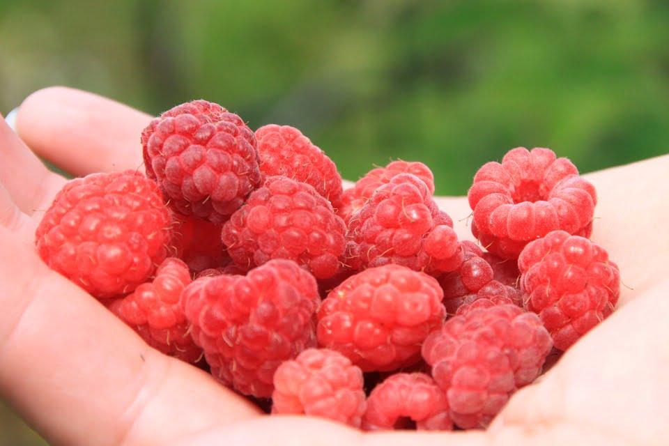 6-zmeura-fructe