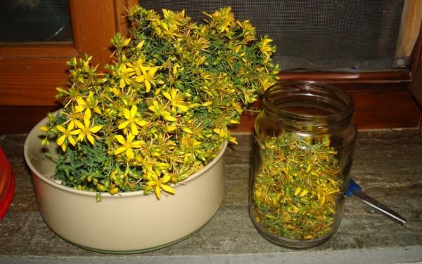 Flori de sunătoare, Foto: vasanakia.blogspot.ro