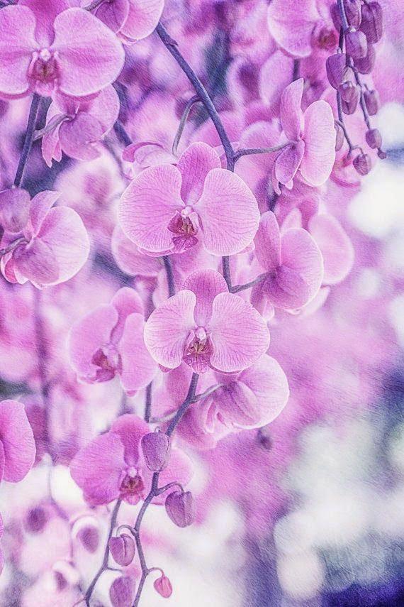 Orhideea - floarea care a inspirat pe creatorii de modă în acest an, Foto: threebestfriendswithablog.blogspot.ro
