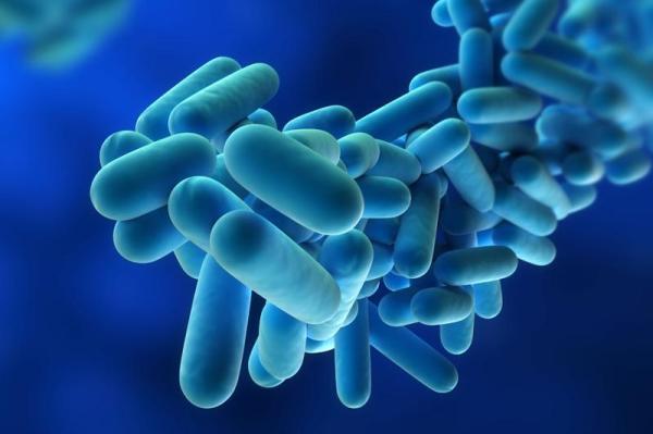 Bacteria Legionella pneumophila, Foto: camelcitydispatch.com