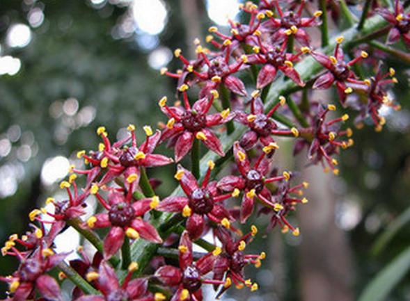 Pilocarp, Foto: flickrhivemind.net