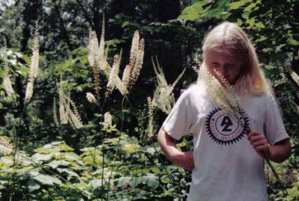 Cimicifuga racemosa, Foto: easywildflowers.com