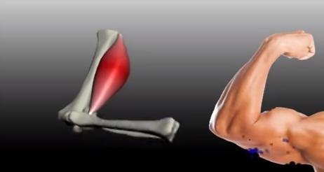 Izoleucina crește forța și rezistența țesutului muscular