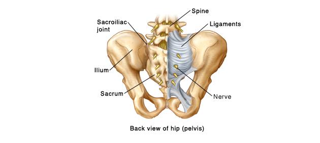 Articulația sacro-iliacă