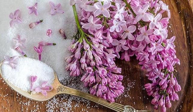Gem din flori de liliac și zahăr, Foto: zahrada-centrum.cz