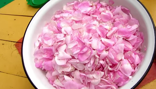 Lichior - petale de trandafiri