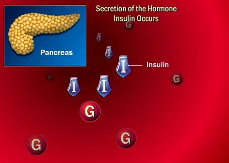 Pancreasul secretă insulina, hormonul ce ajută la normalizarea nivelului de glucoză din sânge