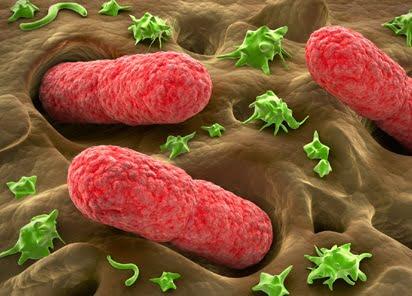 Colita hemoragică, Foto: diopgmbh.com