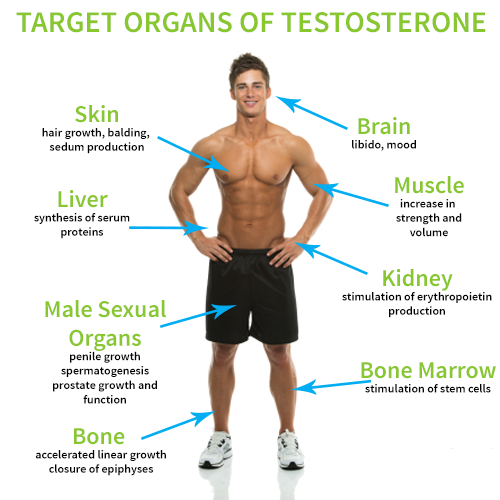 Testosteron, Foto: ageonicsmedical.com