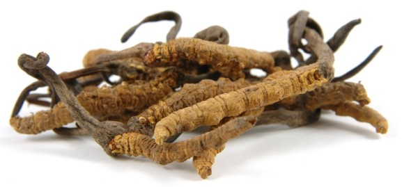 Ciuperca Cordyceps sinensis, Foto: soundmindmeditation.com