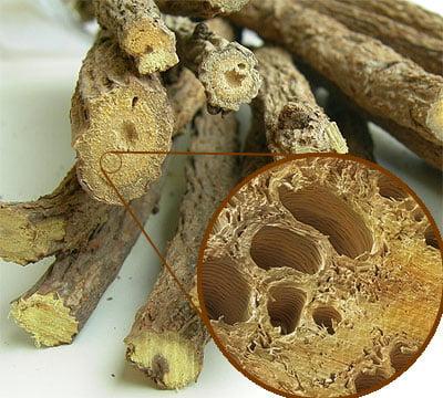 Rădăcina de lemn-dulce, Glycyrrhiza glabra, Foto: middlepath.com.au