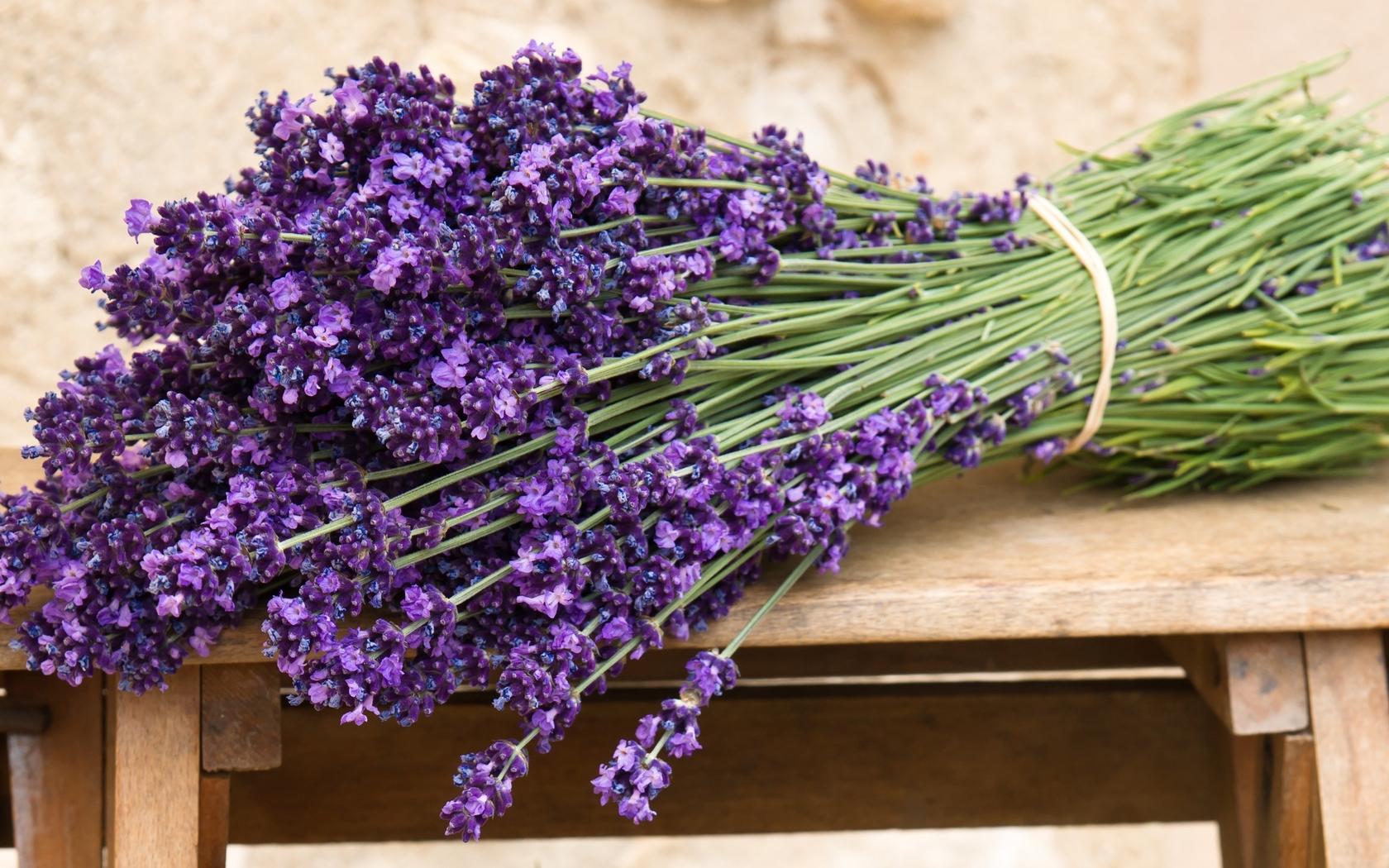 Levănțica, Foto: homester.com.u