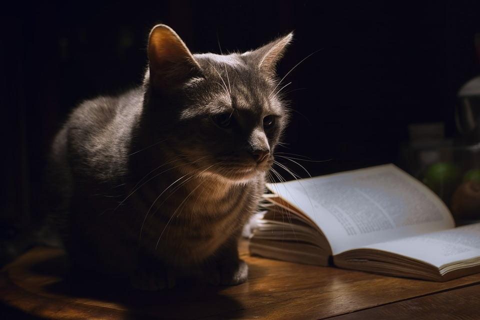 Pisicile sunt active noaptea