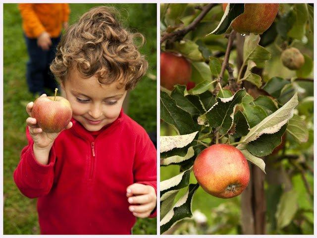 Fructe proaspete, Foto: aleandchuck.blogspot.ro
