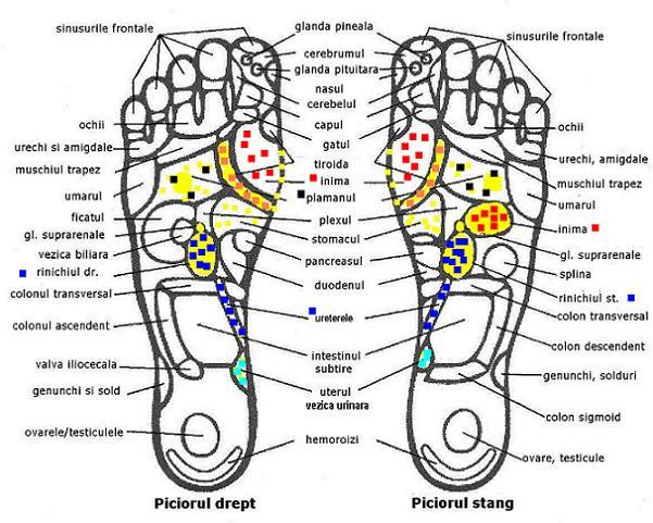 Zone reflexogene de pe tălpile picioarelor, Foto: ascensiuneaspiritului.blogspot.ro
