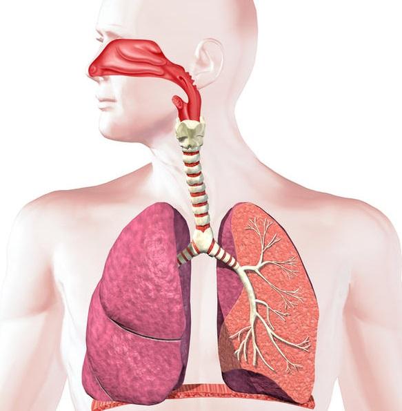 Aparatul respirator, Foto: healthtap.com