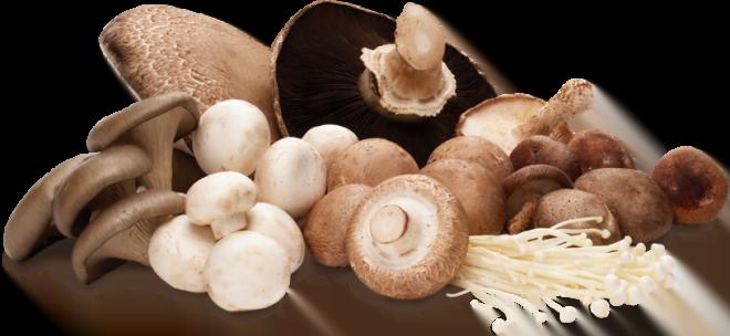 Cura cu ciuperci, Foto: foundmushrooms.co.uk