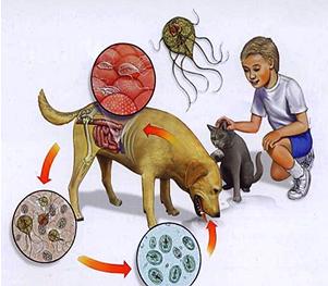 Infecția lamblia intestinalis, Foto: krasnodarmvl.ru
