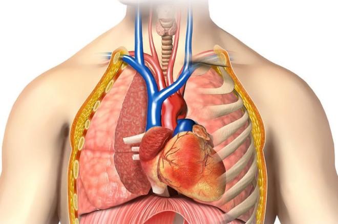 Intervenții chirurgicale intratoracice, Foto: humananatomypedia.net